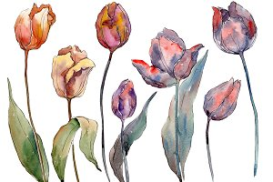 Wildflower autumn tulips PNG set