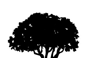 Olive tree silhouette on white