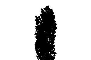 Poplar tree silhouette on white