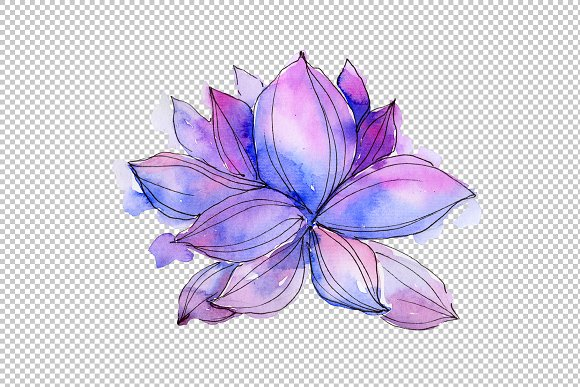 Aquarelle Lotus Flowers Png Set Illustrations Creative Market