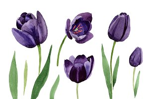 Black tulips PNG watercolor flower