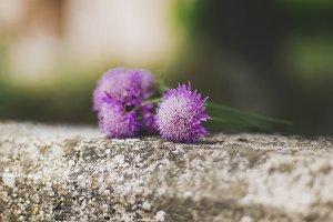 Apulian flowers
