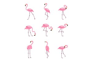 Tropical greater flamingo