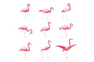 Set of isolated pink flamingoes