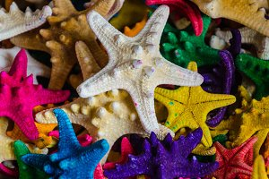 colorful starfish background