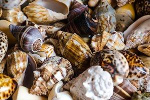 marine shell background