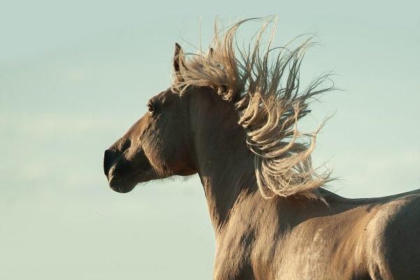 Animal Stock Photos - palomino horse portrait on the sky b