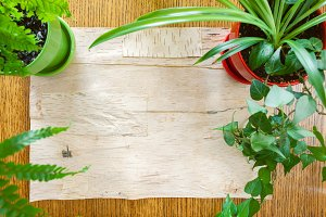 House Plants and Wood Background Fla