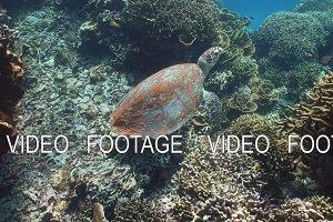 Sea turtle under water.
