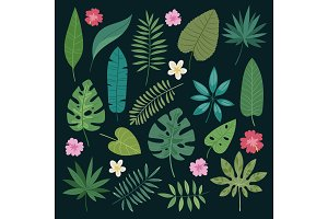 Tropical vector leaves summer green