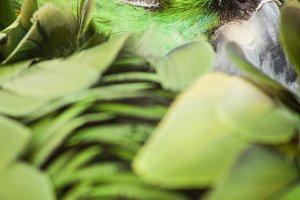 Yellow - Naped Amazon Parrot