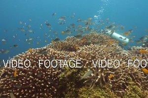 Scuba Diver underwater.