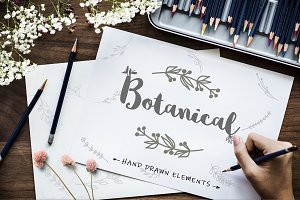 Botanical Hand Drawn Logo Element