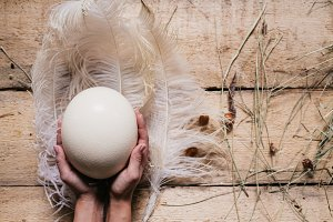 feather of an ostrich and egg