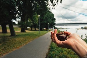 Fresh chestnuts in woman hands, outd