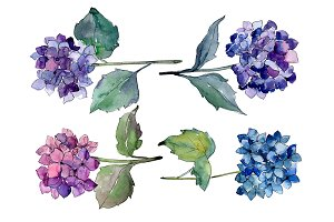 Hydrangeas flowers PNG watercolor