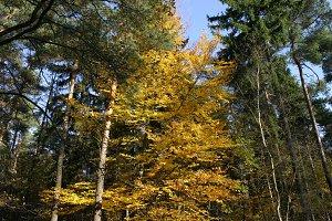 Autumn tree tops 02