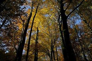 Autumn tree tops 03