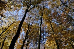 Autumn tree tops 04