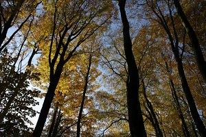 Autumn tree tops 05