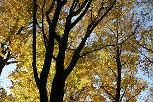 Autumn tree tops 06