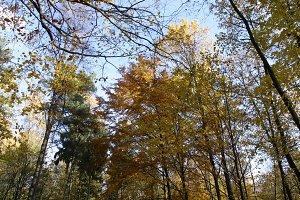 Autumn tree tops 07