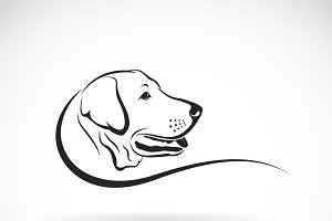 Vector of Labrador dog's head. Pet.