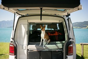 Cute dog sits in trunk of camping