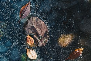 Leaves And Ice Abstract