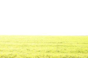 Grassland green field