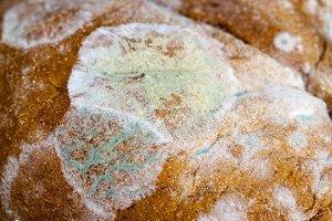 toxic black rye bread
