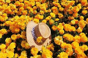 The elegant straw hat