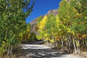 Autumnal colors of dirt road