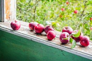 Red organic apples on window sill