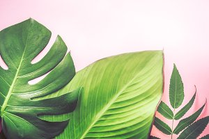 different beautiful tropical leaves