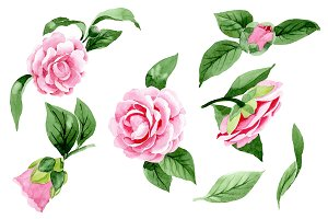 Wonderful pink camellia PNG set