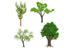 Highly detailed realistic trees set
