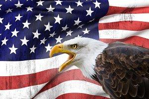 Bald eagle and USA flag