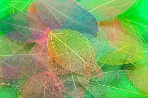 Colored leafs. Leaf texture pattern.