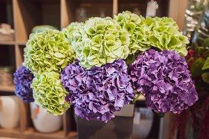 Huge bouquet of hydrangeas