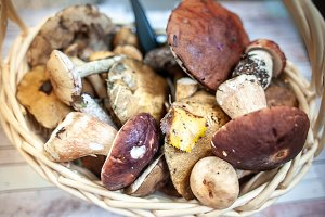 Fresh forest mushrooms in the basket