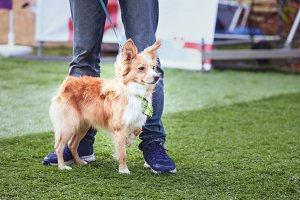 Exhibition of dogs, Miniature funny