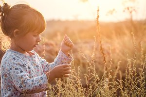 little cute girl in a field at sunse