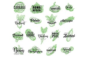 Vegetables and salads lettering