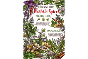 Vector spices and herbs food