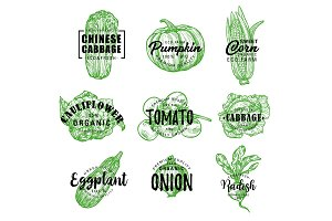 Organic farm vegetables lettering