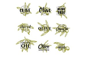 Olive oil and farm olives vector