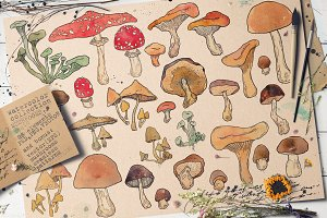 WATERCOLOR MUSHROOMS SET. vol1.