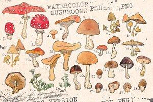 WATERCOLOR MUSHROOMS SET. vol1.