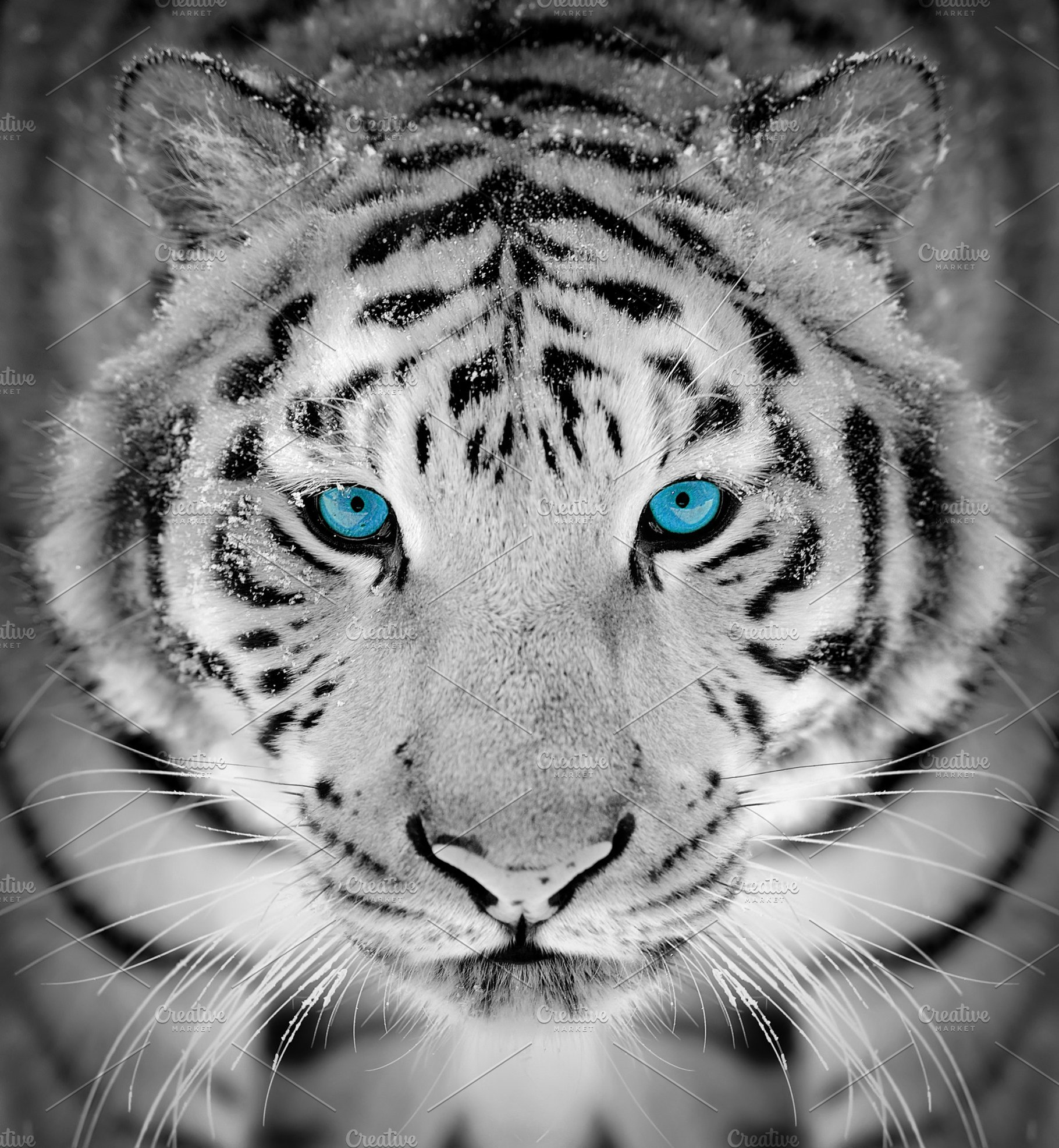 3b2d3f4d6 Tiger portrait in winter time with b ~ Animal Photos ~ Creative Market
